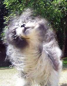 dog-tai-chi